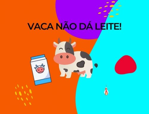 Vaca não dá leite